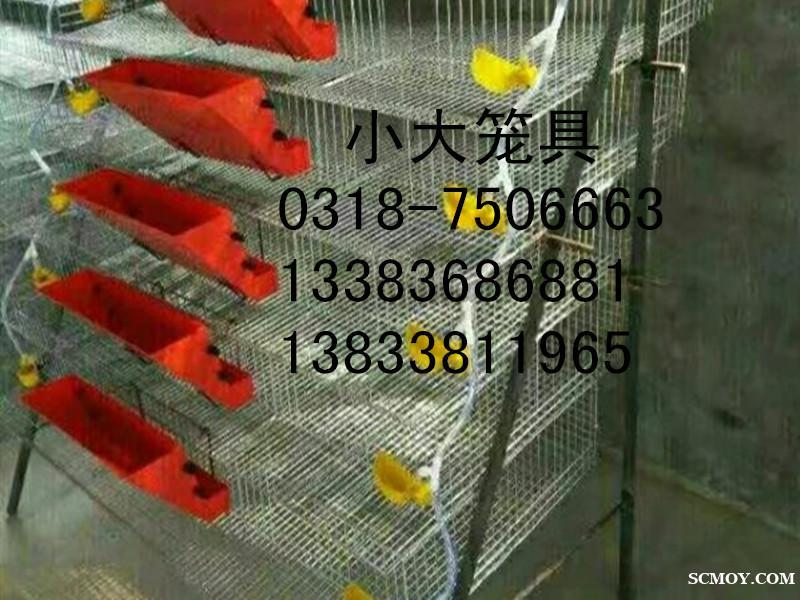 供应运输笼宠物笼鹌鹑笼鸽子笼兔子笼鹧鸪笼鸡笼狗笼运输筐 兔笼